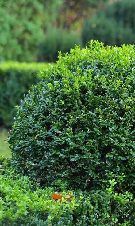 Happy House Construction LLC Residential Shrubs & Hedges