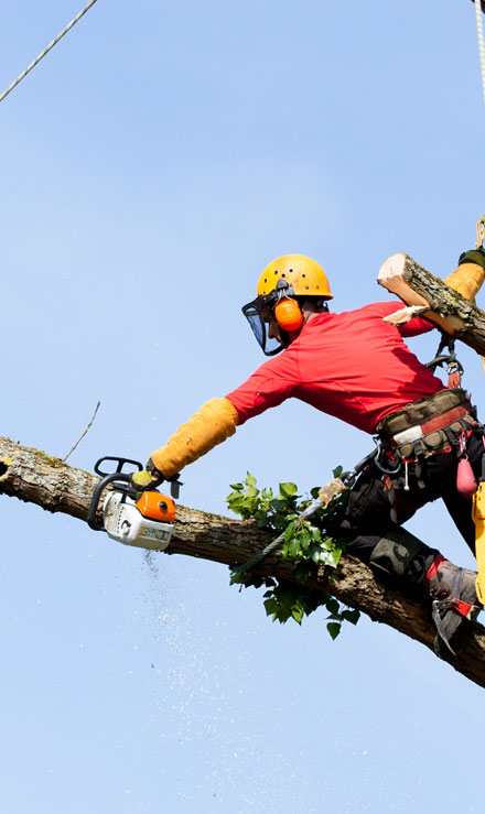 Happy House Construction LLC Tree Services