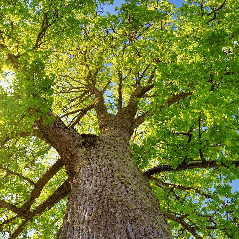 Tree Health Service